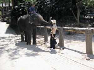 elephant-camp-mae-sae-thai-et-vous