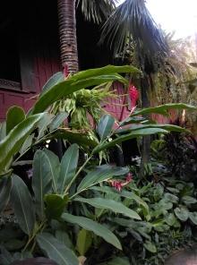 jardin-jim-thompson-house @thaietvous