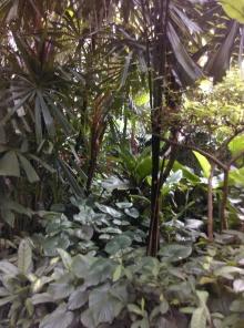 jardin-jth @thaietvous