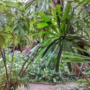 jardin-tropical-jth @thaietvous