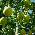 citron-vert-thaietvous-com