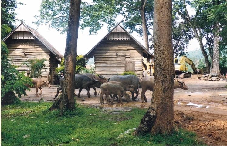 don-xao-lao-thaietvous-com (2)
