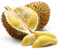 durian-thaietvous-com.png