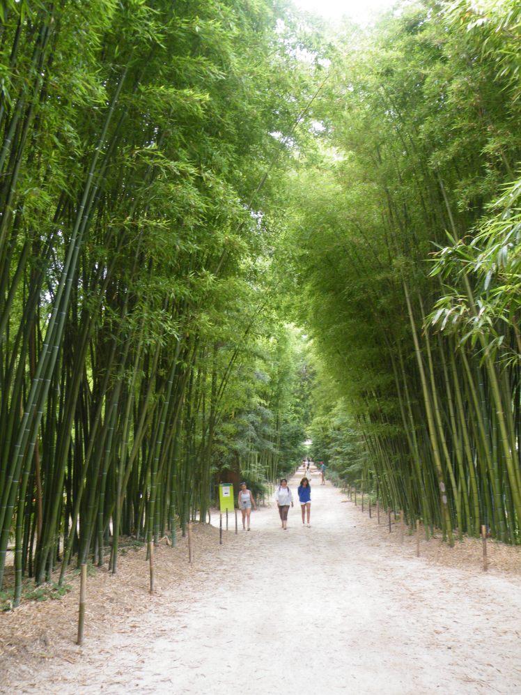 bambous-thaiet-vous-com