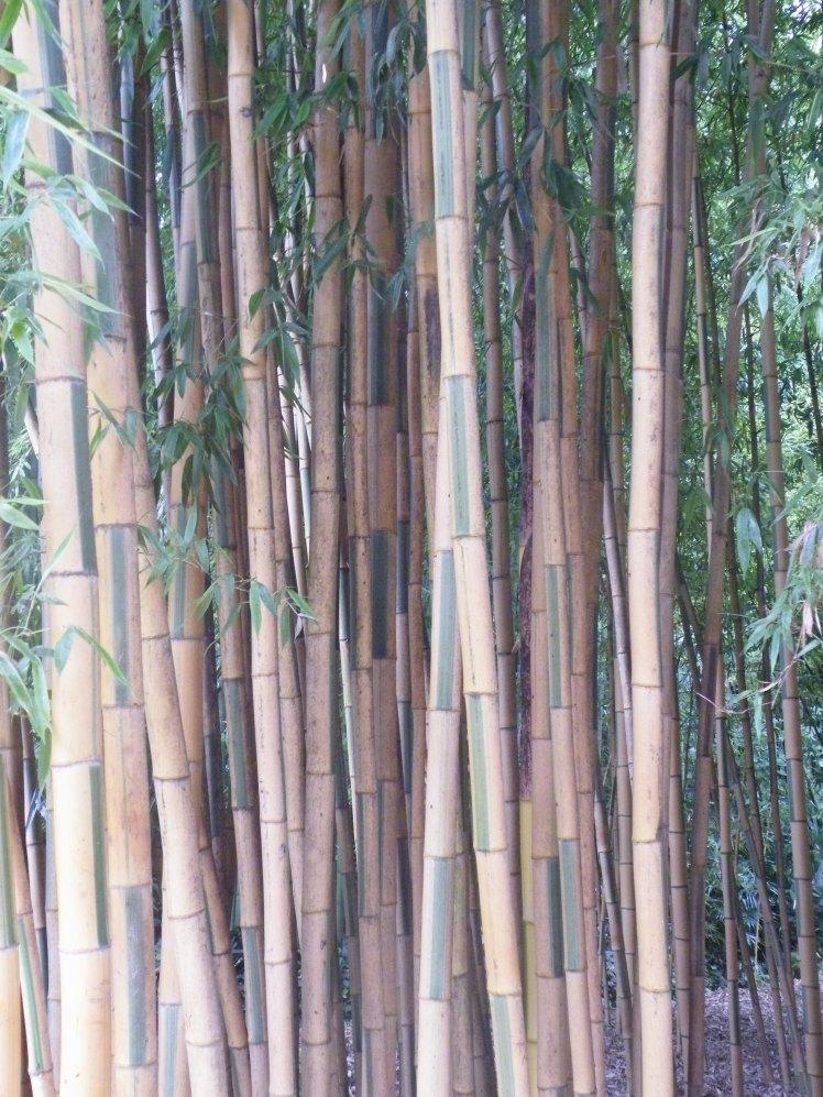 bambouseraie-thai-et-vous-com