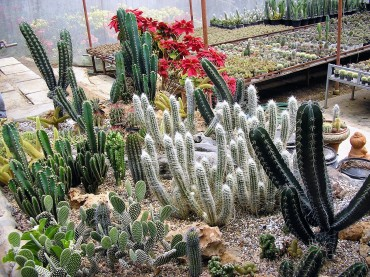 cactus-thaietvous-com