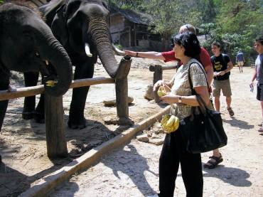 mae-sa-elephant-camp-thaietvous-com (2)