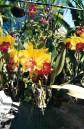 marché-aux-fleurs-bkk-thaietvous-com.jpg