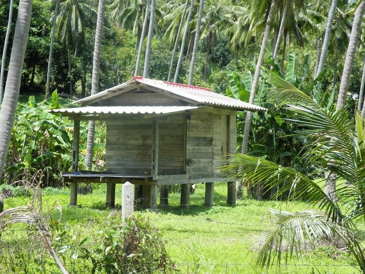 forêt-samui-thaietvous-com