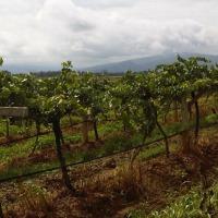 Le vin en Thaïlande