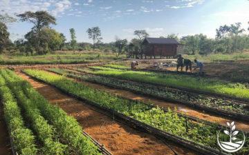 woofing-thailande-volontariat-benevolat-eco-village-ecotourisme-permaculture-tropicale-issan-issan-tourisme-vert-siam-sejour-ferme-autosuffisance-bio-e1553870294522