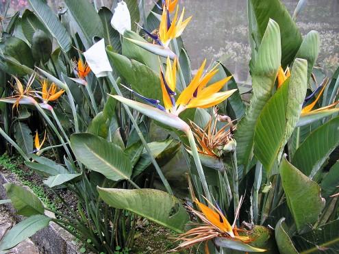 botanic-gardens@thaietvous (2)