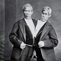L'incroyable histoire des frères Chang et Eng
